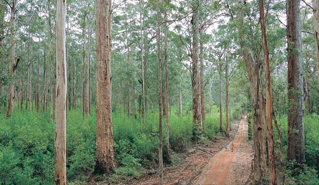 Karri-Forest